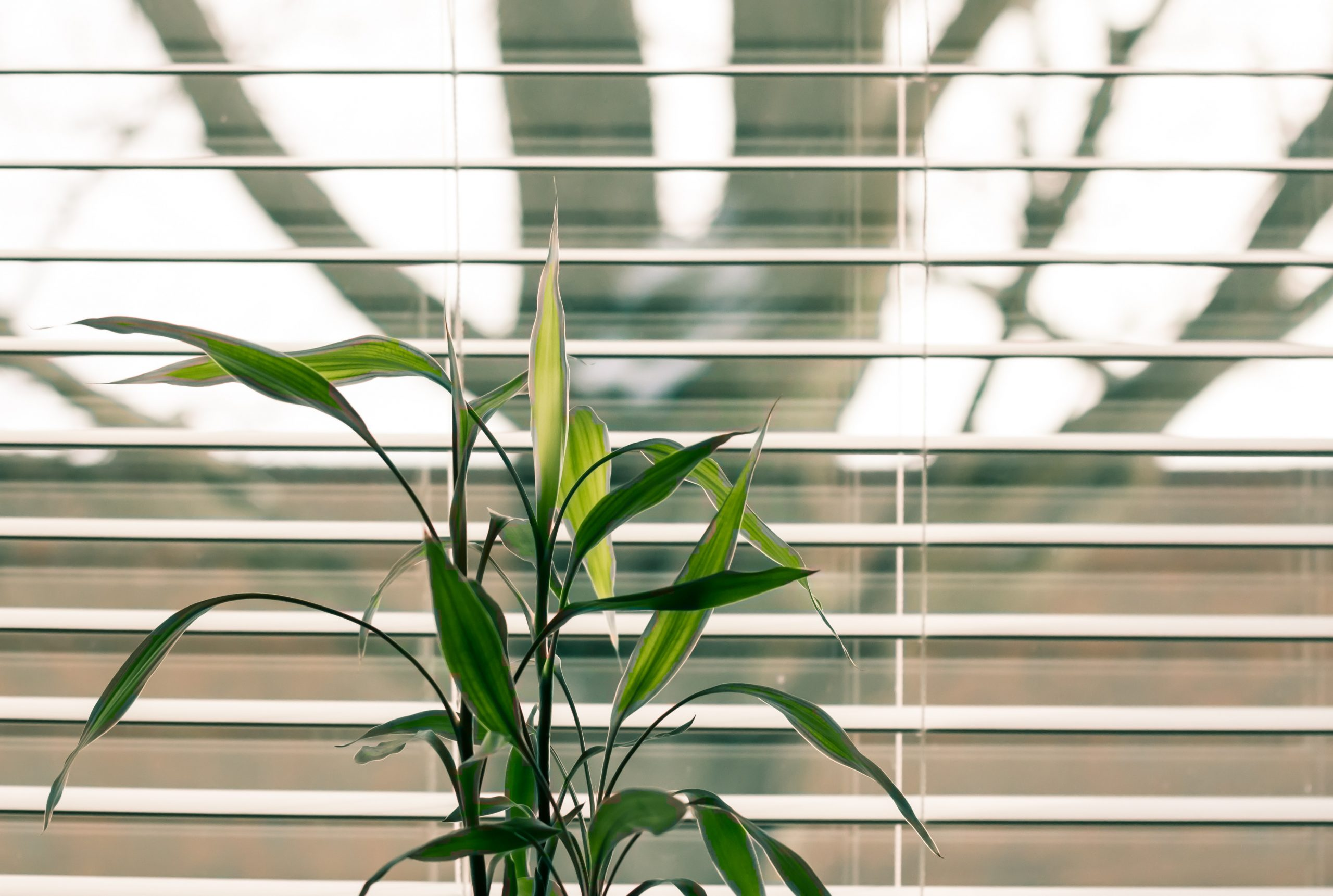 How to stop your conservatory from overheating
